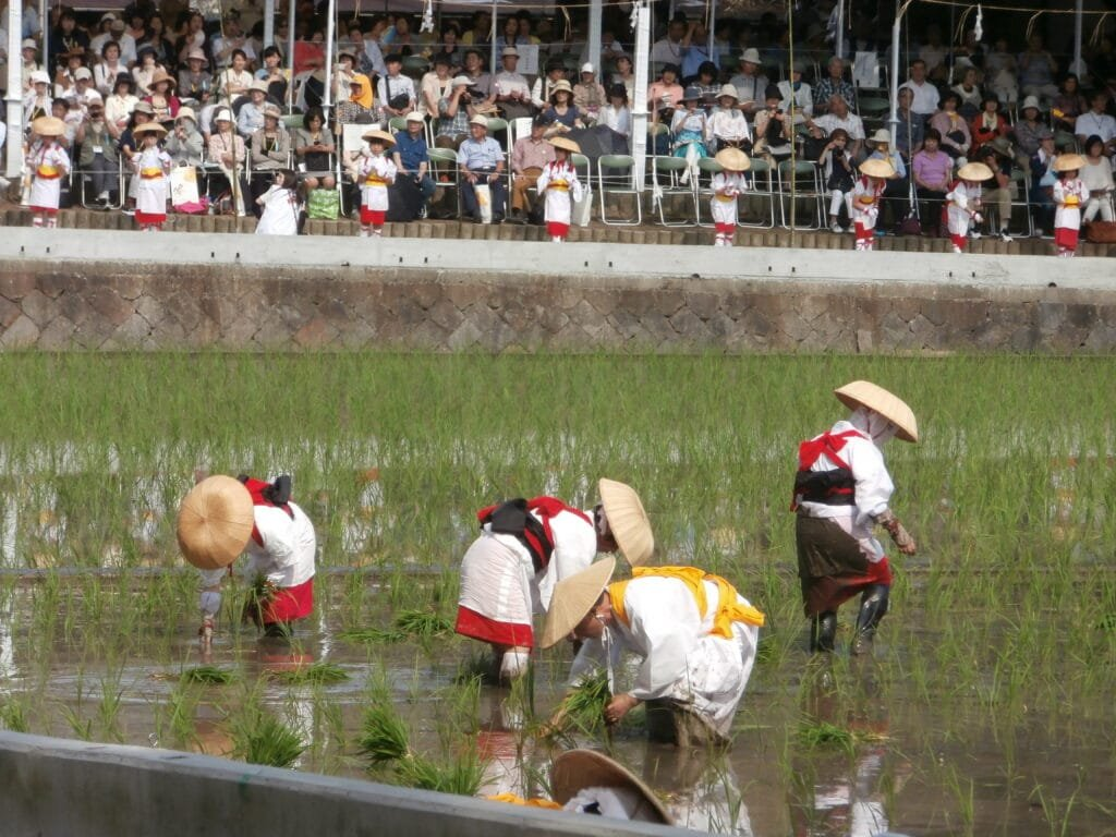 Otaue ceremony at Sumiyoshi Grand Shrine.