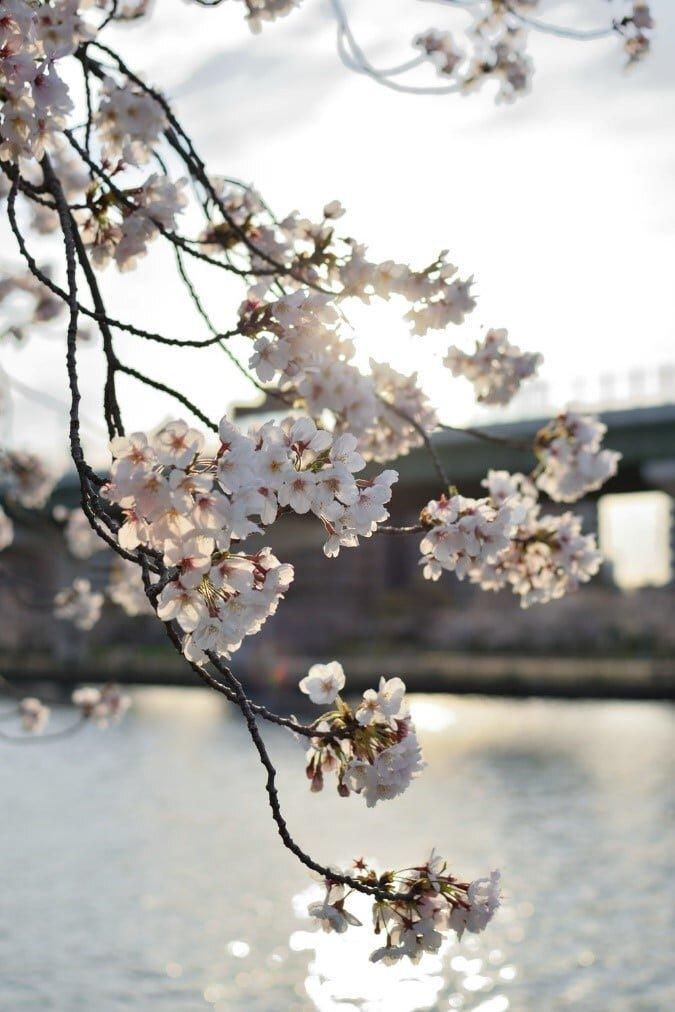 Sakuranomiya Park