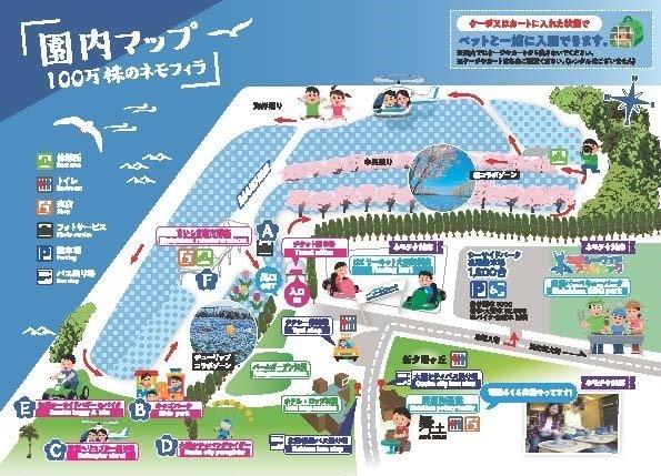 Nemophila Festival